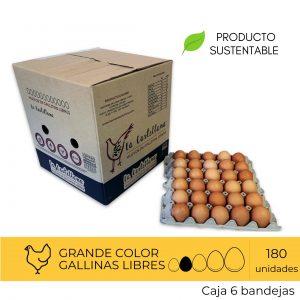 Huevos Primera Color 180 Unidades